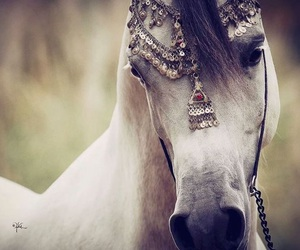 horse, animal, and arabian image