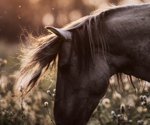 horse and photography image