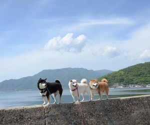 dog, animals, and ocean image