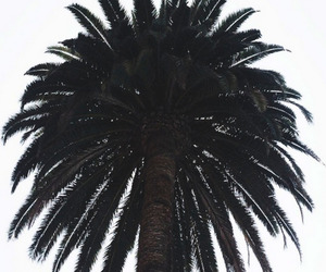 palm, photography, and tree image