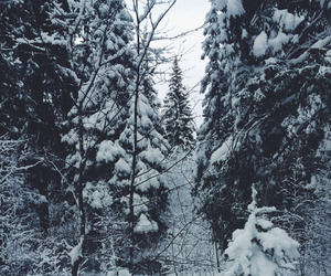christmas, nature, and norway image