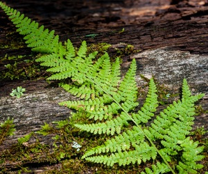 fern, garden, and green image