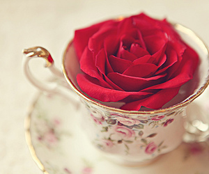 rose, flowers, and cup image