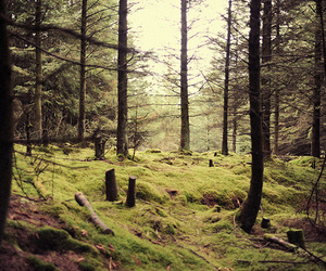 forest, photo, and nature image