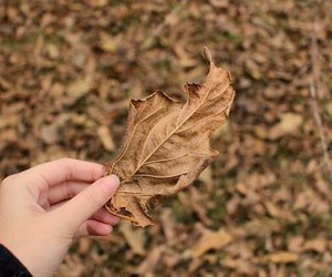 autumn, beautiful, and cold image