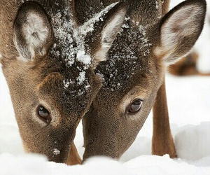 animals, snow, and beautiful image