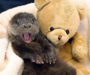 cute, otter, and animal image