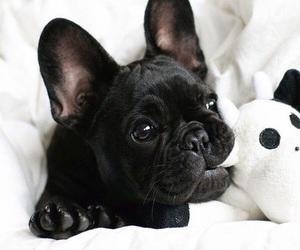 dog, animal, and baby dog image