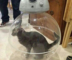 cat, star wars, and bb-8 image