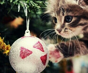 cat, sosweet, and christmas image