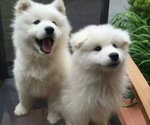 couple, doggie, and white image