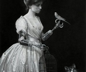 bird, art, and cat image