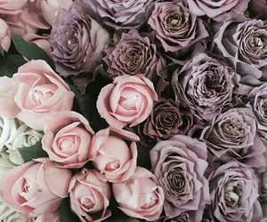 pink, purple, and roses image