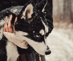 Christmas time, dog, and winter image