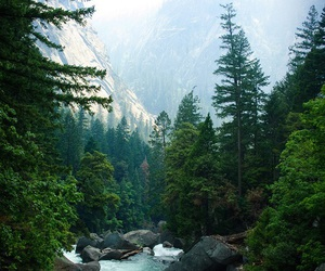 nature, river, and forest image