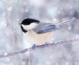 bird, winter, and animal image