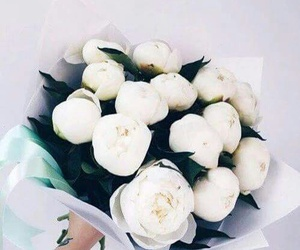 white flowers ♡ image