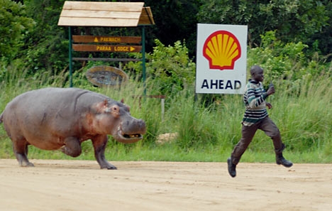 eat, run, and hippo image
