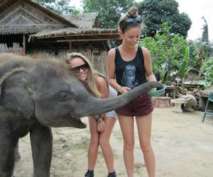 animals, elefante, and girls image