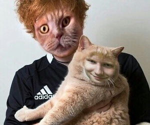 cat, ed, and funny image