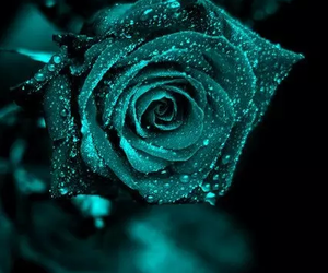 flowers, rose, and green image
