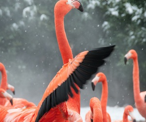 animals, bird, and black image
