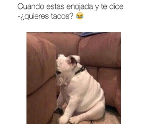divertido, dog, and funny image