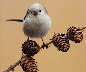 animal, bird, and pine cones image
