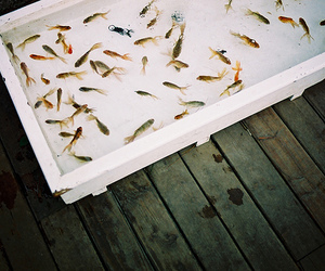 fish, photography, and indie image