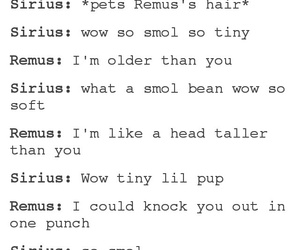 funny, harry potter, and sirius black image