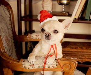 christmas, dog, and eyes image