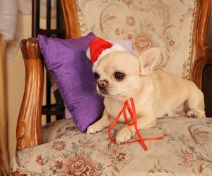 christmas, new year, and chivava image