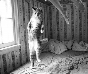 bed, jump, and black&white image