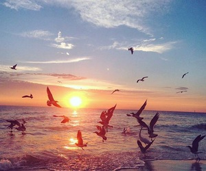 beach, beautiful, and birds image