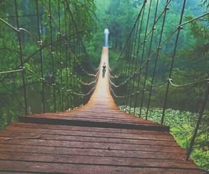 adventure, bridge, and forest image