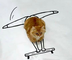 beauty, cat, and creative image