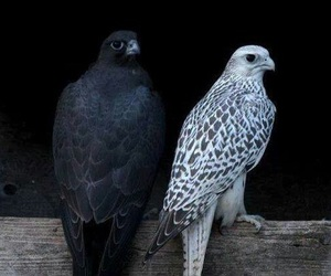 bird, animal, and black image