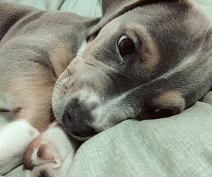 baby animals, cute, and dogs image