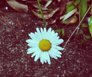 alone, flowers, and photography image