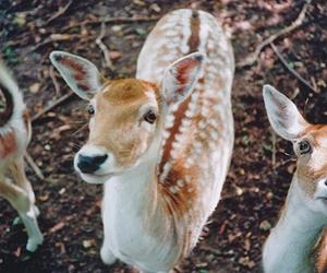 animal, deer, and photography image
