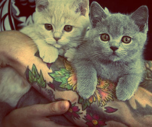 cat, tattoo, and cute image