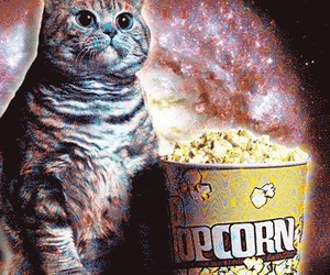 cat and popcorn image