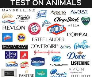 animals, peta, and animal rights image