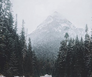 mountains, snow, and forest image