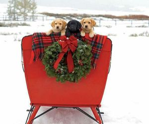 christmas, puppy, and animals image