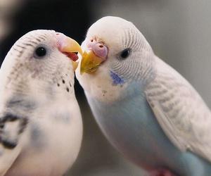 bird, sweet, and love image