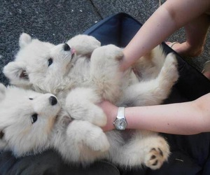 fluffy, workout, and twins puppy's image
