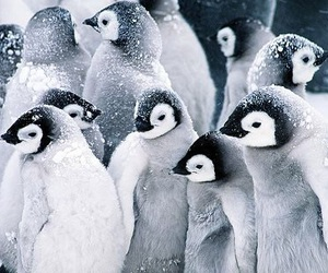 penguin, animal, and blue image