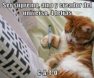 cat, the creator, and amazing image
