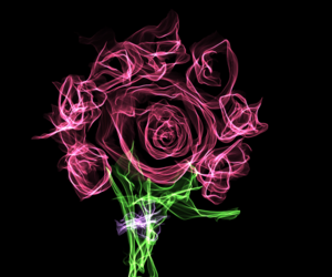 flower and rosa image